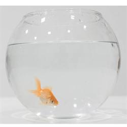 Start a Fish Tank