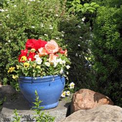 Sensory Botanical Garden or Conservatory Visit